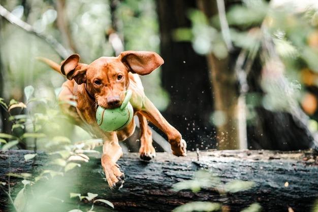 Why Do Dog Toys Squeak?   FunaDog Vet Experts Full Guide