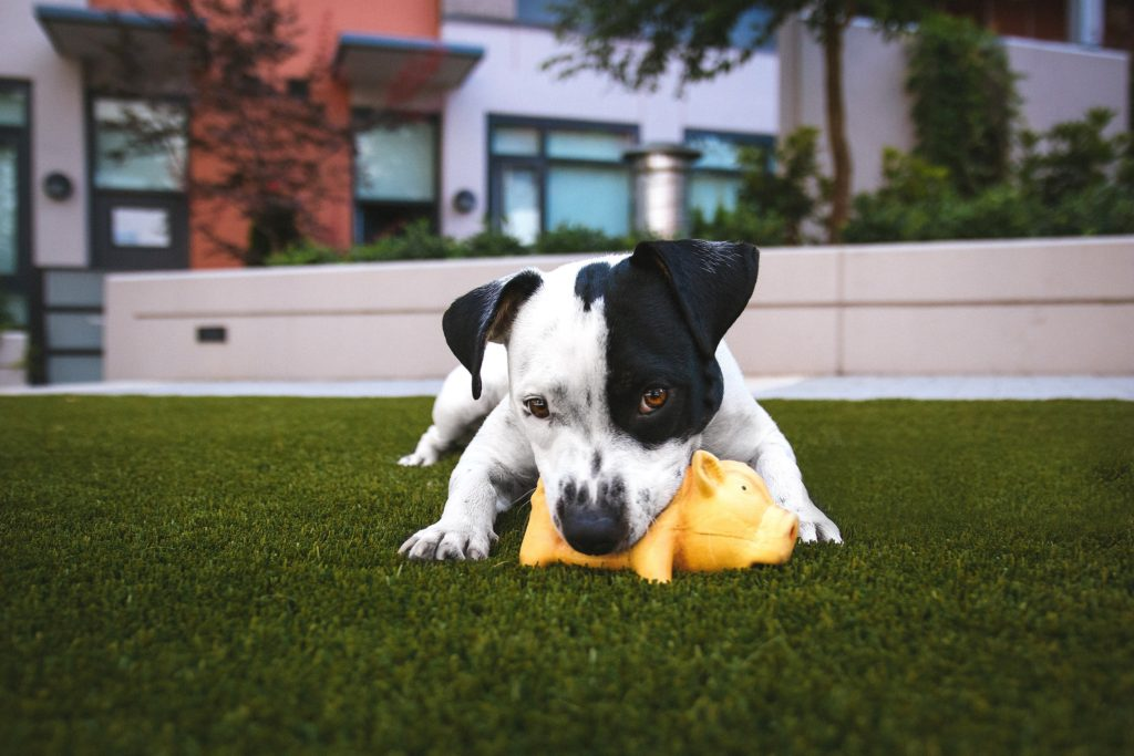 The rubber dog toy is exceptionally durable and robust