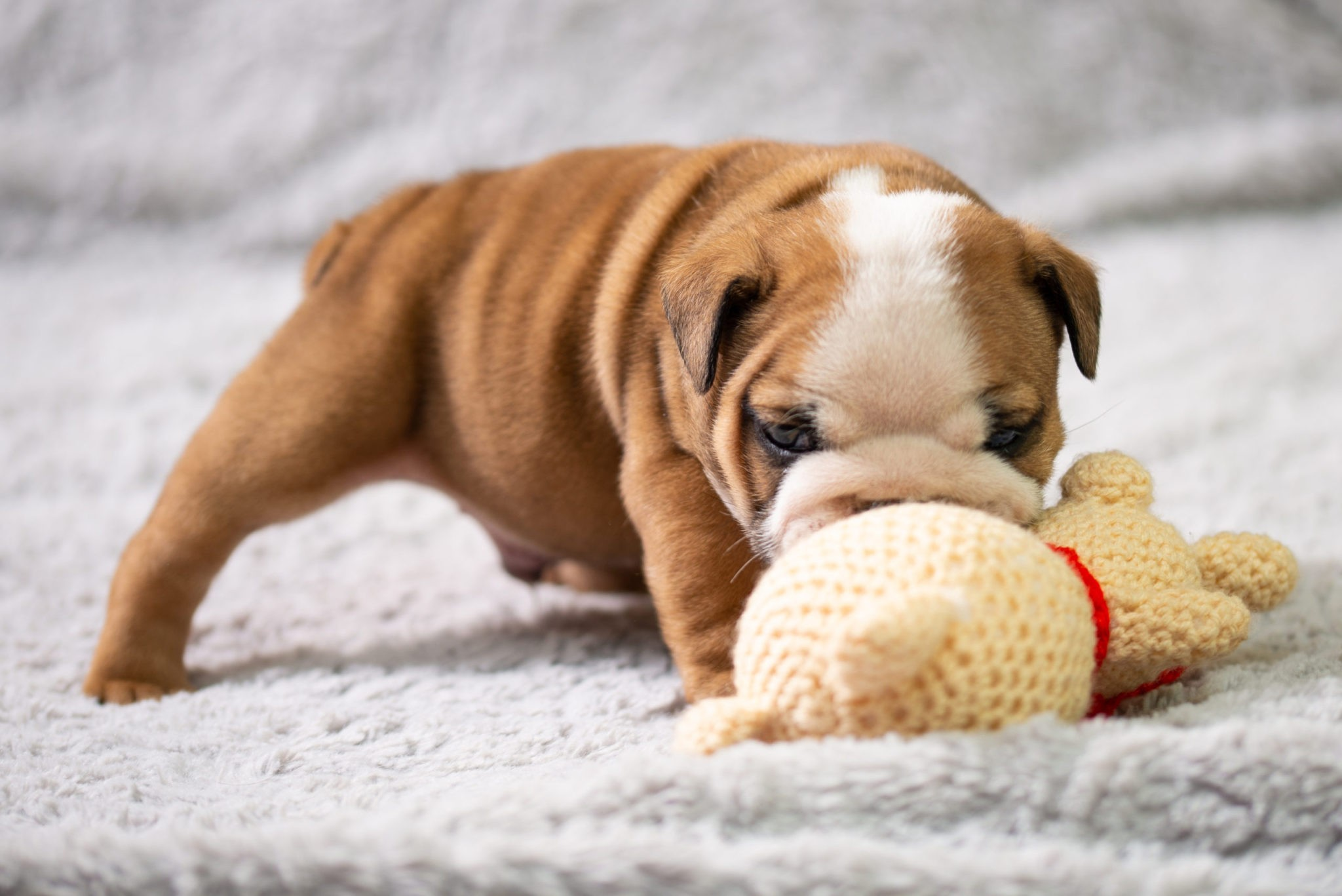 Top 10 Best Plush Dog Toys For Aggressive Chewers Of 2020