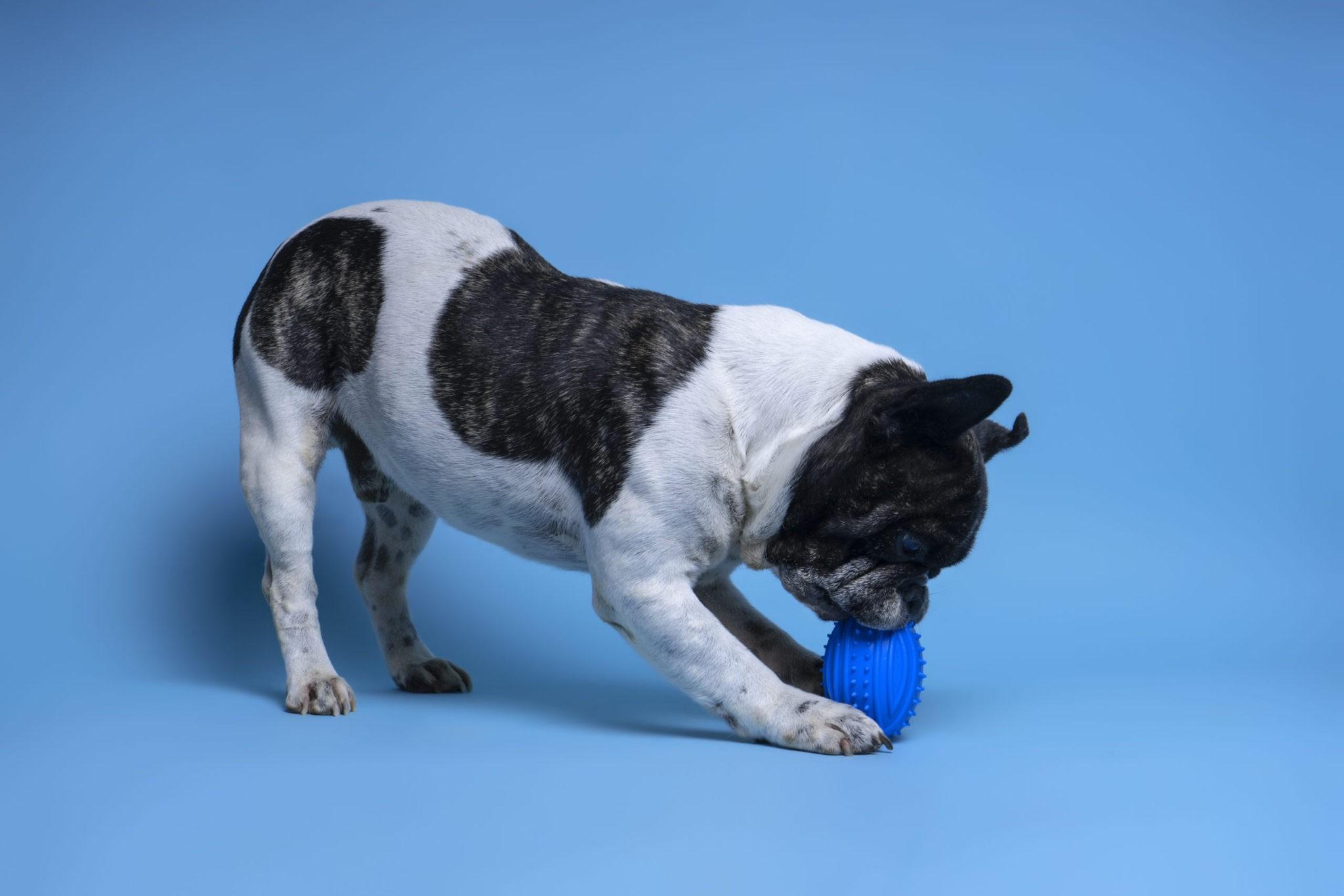 Top 10 Best Tough & Indestructible Squeaky Dog Toys | Funadog