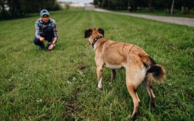 Top 7 Best Dog Training Collar Under 100$ in 2021   Funadog