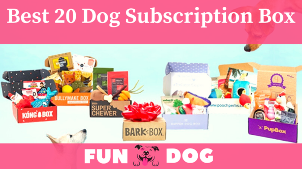 20 Best Monthly Dog Subscription Box 2021 | Worth The Money