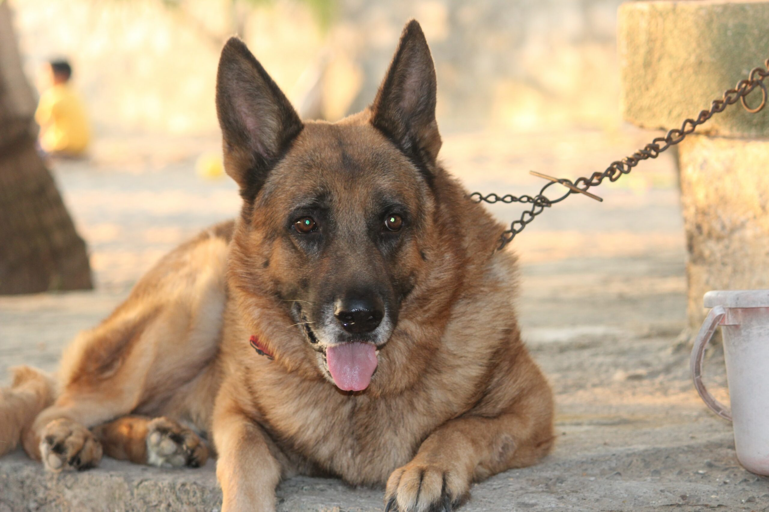 Buying guide of Toys for German Shepherds