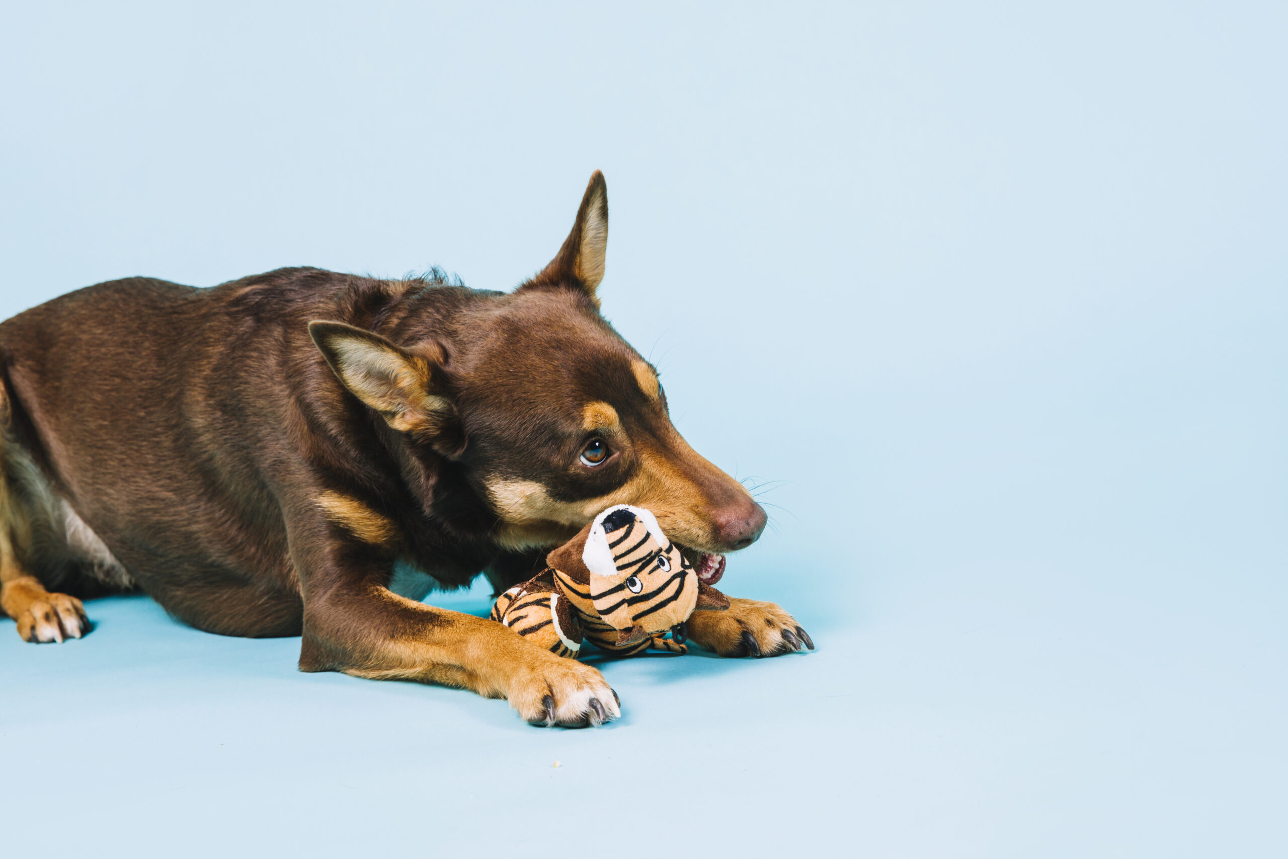 Top 12 Best Dog Toys Of 2021 That Are Durable & Fun To Play