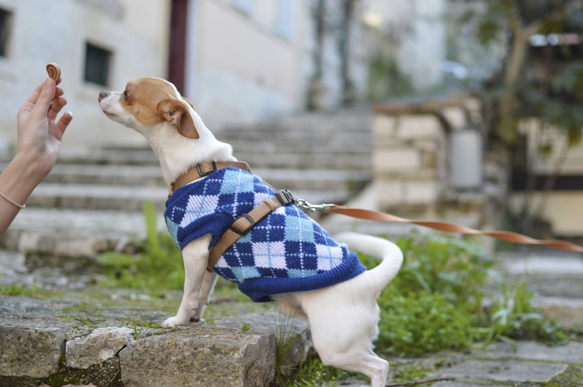 Things to Look for when Choosing a Dog Treat Pouch